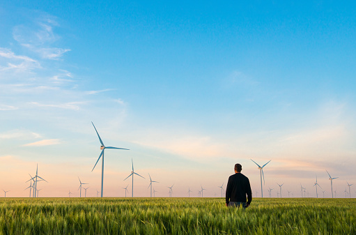 Man on green field of wheat with windmills for electric power